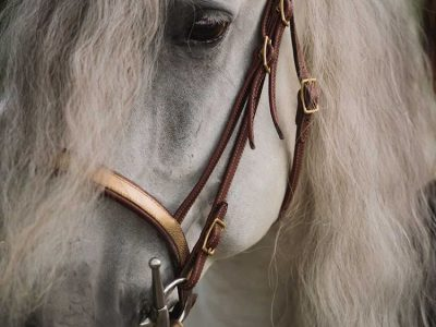 Bridle with croco leather